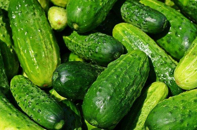 świeże zielone ogórki